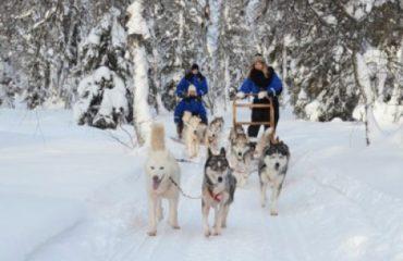 finlandia husky safari